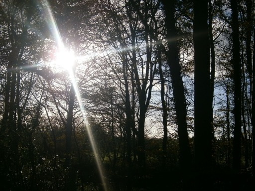 sunlight-73207_640