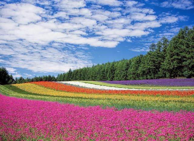 flower-garden-250016_640