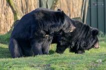 collar-bear-266798_640