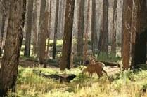 deer-315720__180
